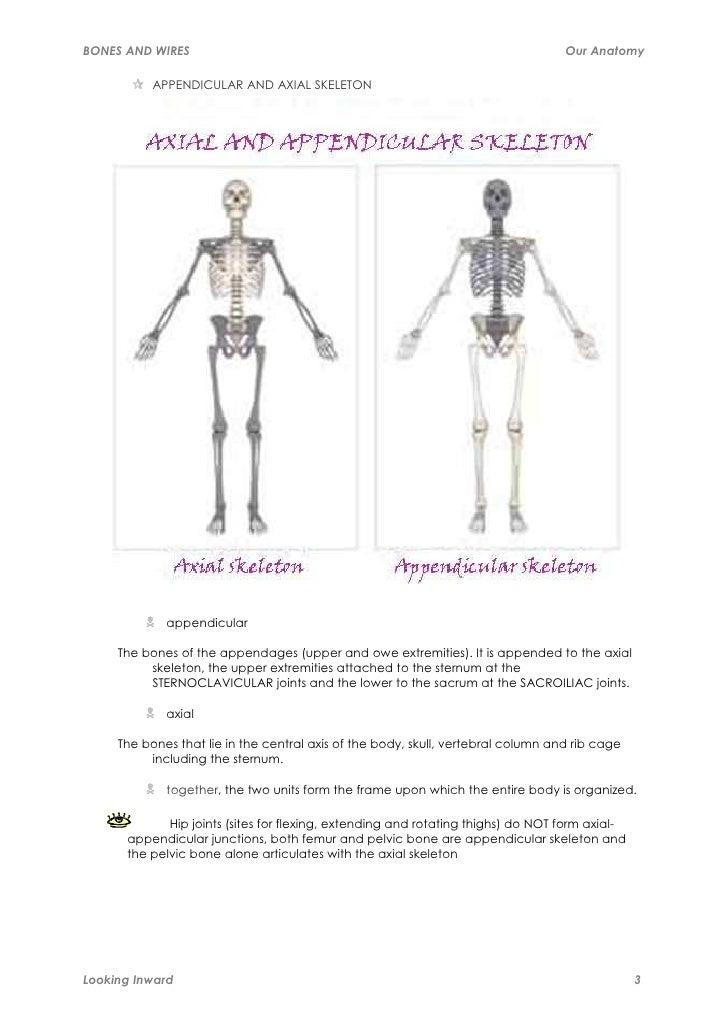 bones-and-wires-3-728.jpg?cb=1318395277