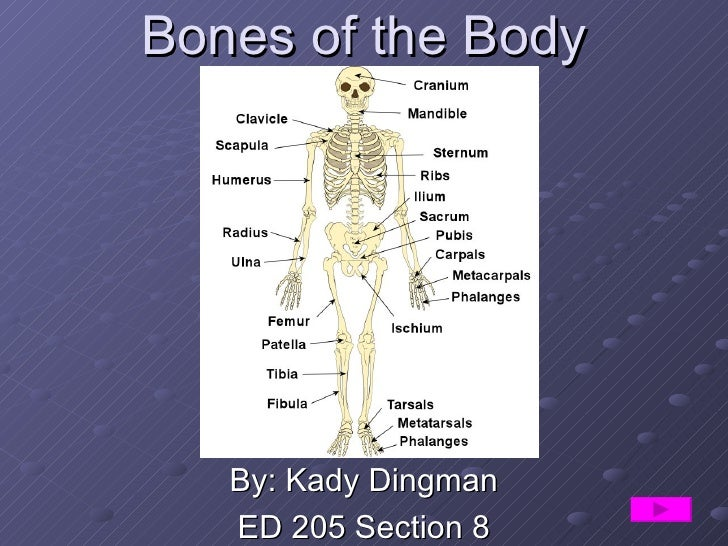 Bones of the Body By: Kady Dingman ED 205 Section 8