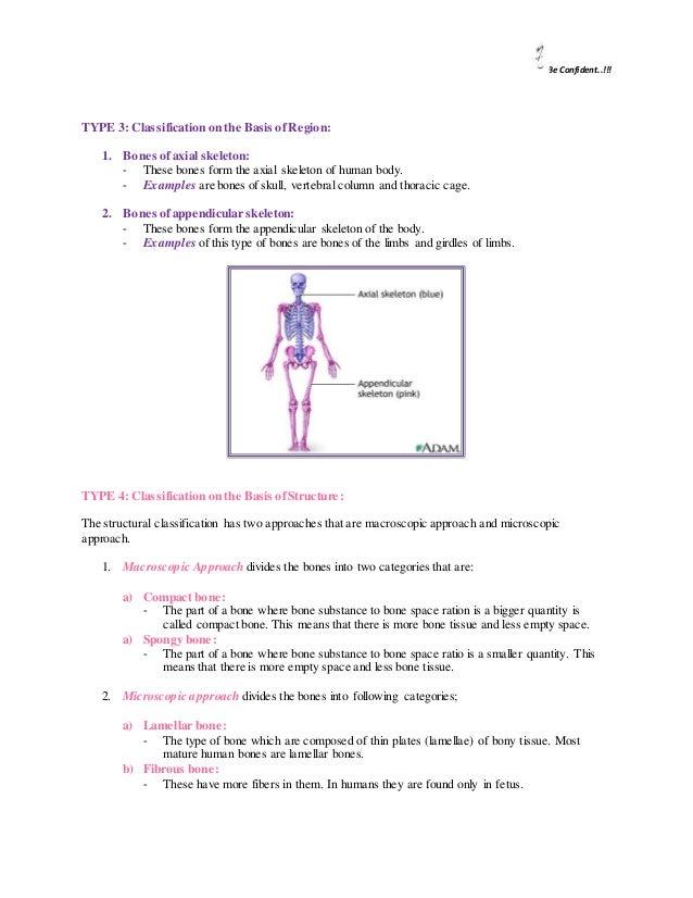 Bone Type Of Bones Type Of Fractures