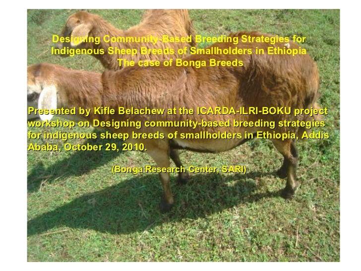 Designing Community-Based B reeding Strategies for Indigenous Sheep Breeds of Smallholders in Ethiopia The case of Bonga B...