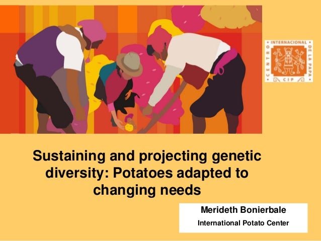 Sustaining and projecting genetic diversity: Potatoes adapted to changing needs Merideth Bonierbale International Potato C...