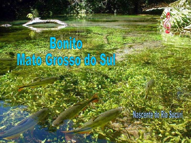 Bonito Mato Grosso do Sul Nascente do Rio Sucuri