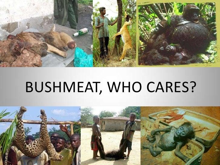 BUSHMEAT, WHO CARES?