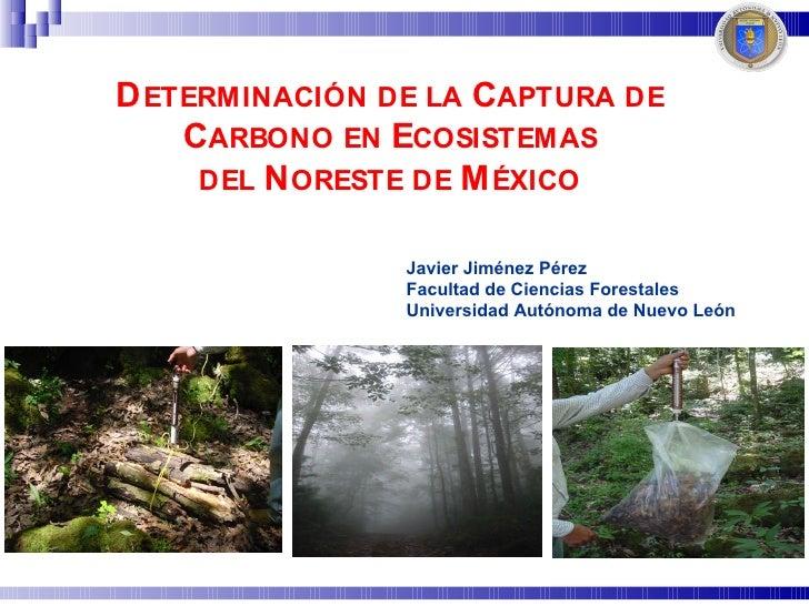 D ETERMINACIÓN DE LA CAPTURA DE     CARBONO EN ECOSISTEMAS      DEL N ORESTE DE M ÉXICO                  Javier Jiménez Pé...