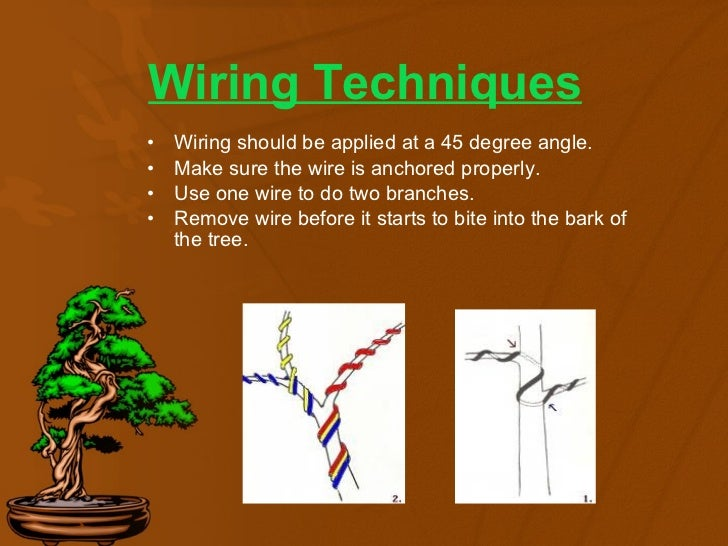 bonsai basics rh slideshare net Bonsai Wiring Tips bonsai wiring basics