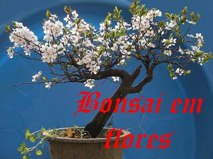 Bonsai em flores