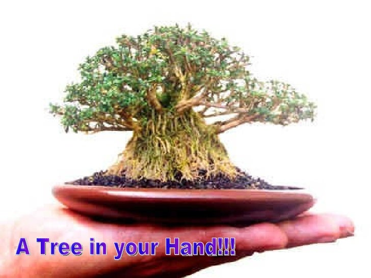 A Tree in your Hand!!!