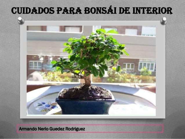 Armando Nerio Guedez Rodriguez Cuidados para Bons�i de interior