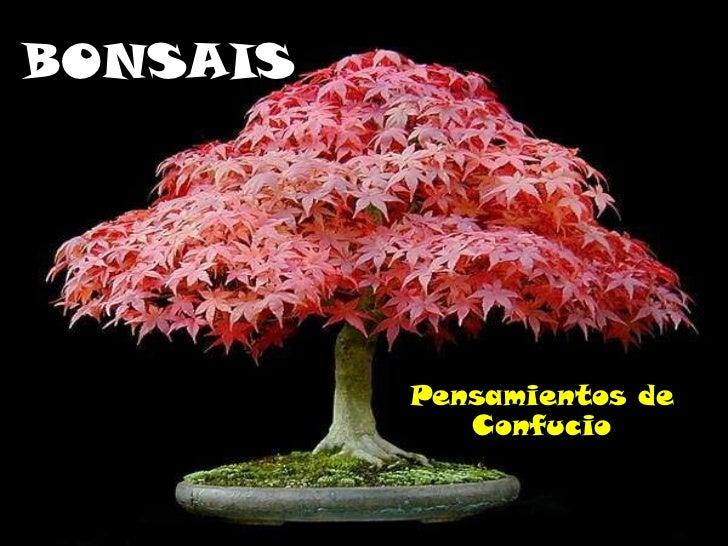 BONSAIS Pensamientos de Confucio