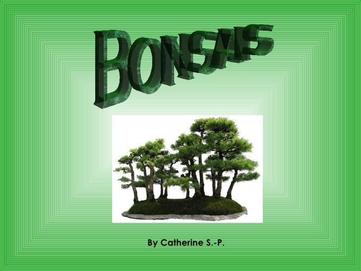 Bonsais By Catherine S.-P.