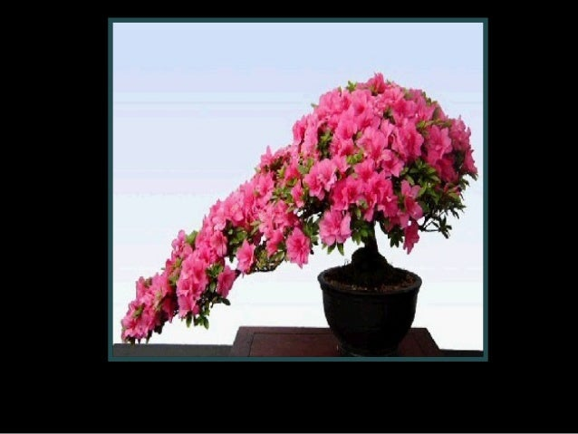 Bonsais en fleurs