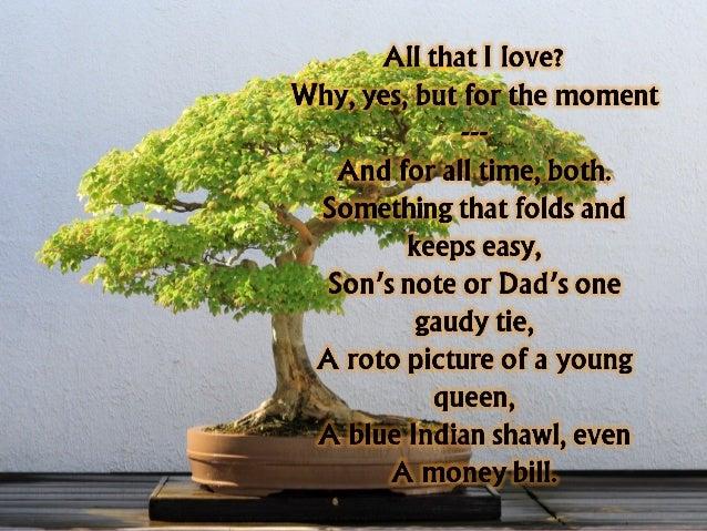 bonsai by edith tiempo