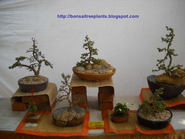 Bonsai Tree Book