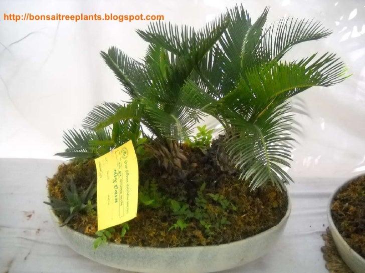 bonsai edith tiempo Philippine literature (poetry) bonsai by edith l tiempo.