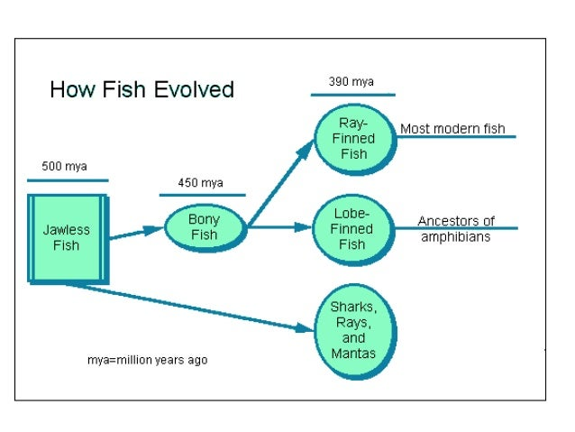 Bony fish for Characteristics of fish
