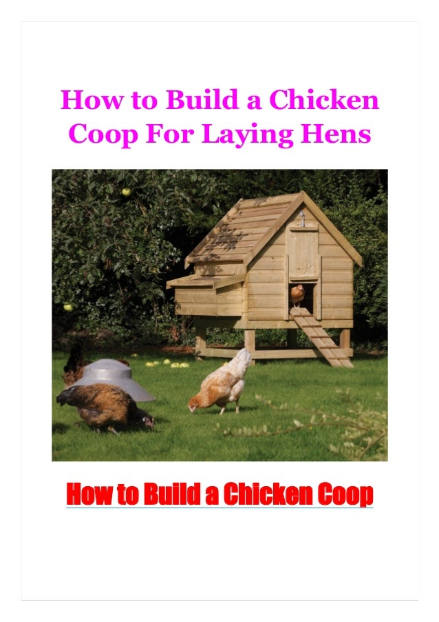 How to Build a Chicken Coop For Laying Hens How to Build a Chicken Coop