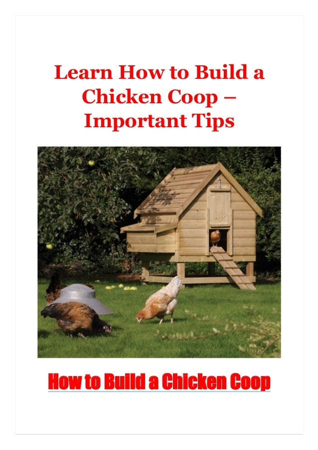 Learn How to Build a Chicken Coop – Important Tips How to Build a Chicken Coop
