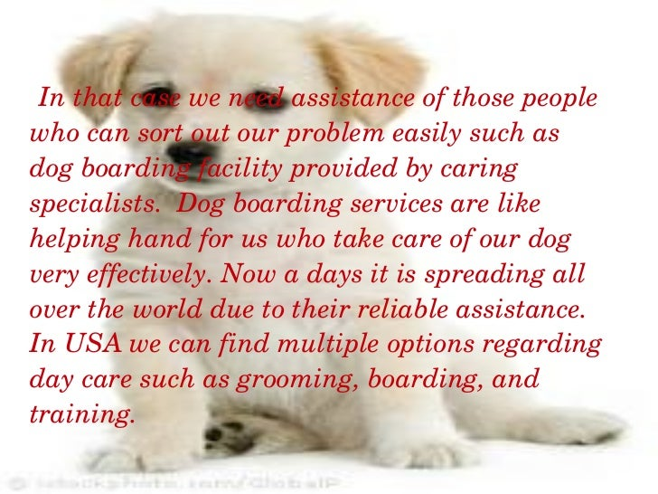 Your Affordable Dog Training in Rochester New York