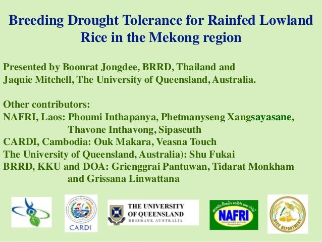 Breeding Drought Tolerance for Rainfed Lowland Rice in the Mekong region Presented by Boonrat Jongdee, BRRD, Thailand and ...