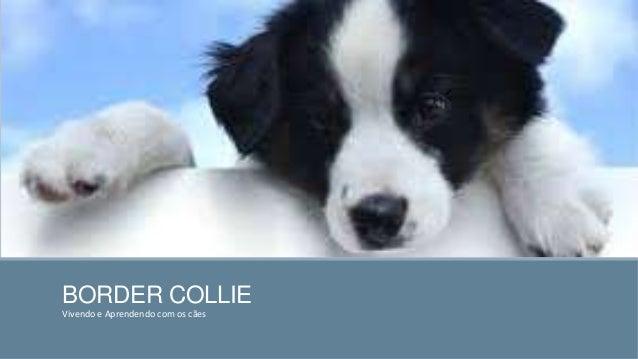 BORDER COLLIE Vivendo e Aprendendo com os cães