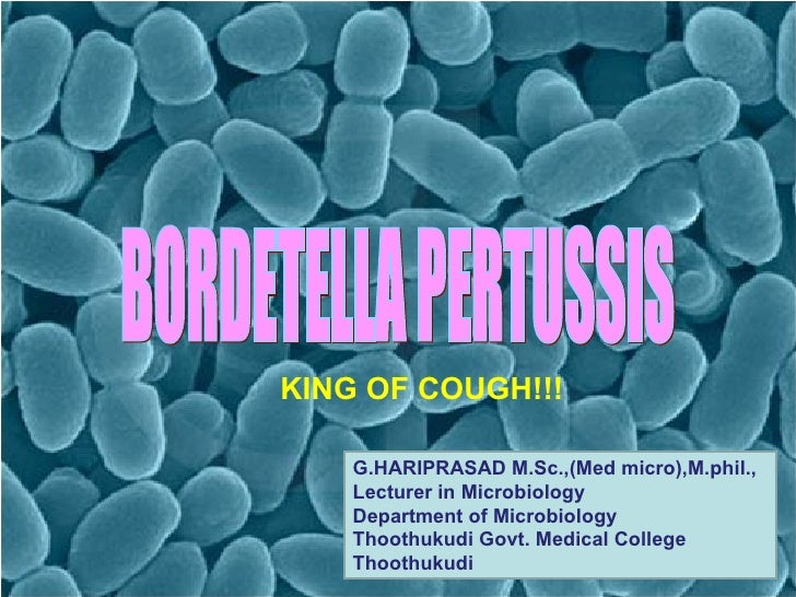 BORDETELLA (WHOOPING COUGH) BORDETELLA PERTUSSIS KING OF COUGH!!!  G.HARIPRASAD M.Sc.,(Med micro),M.phil., Lecturer in Mic...