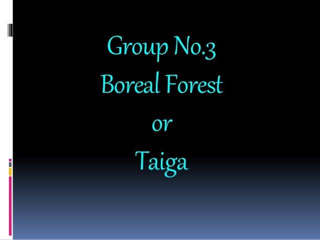 GroupNo.3 BorealForest or Taiga