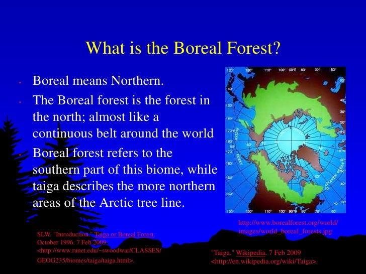 Biomes Project Example