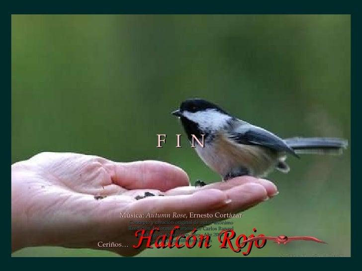 <ul><li>Música:  Autumn Rose , Ernesto Cortázar </li></ul><ul><li>Ceriños…  Halcón Rojo </li></ul>F  I  N Concepto y creac...