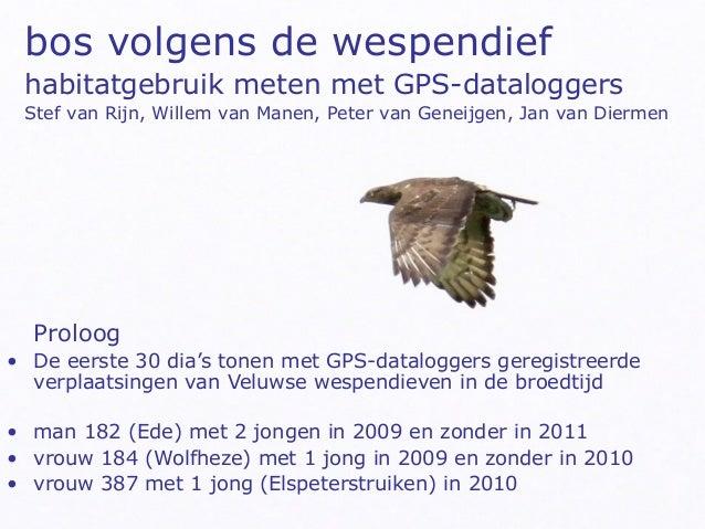 bos volgens de wespendief habitatgebruik meten met GPS-dataloggers Stef van Rijn, Willem van Manen, Peter van Geneijgen, J...