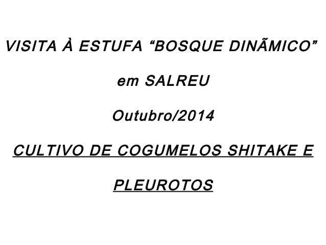 """VISITA À ESTUFA """"BOSQUE DINÃMICO""""  em SALREU  Outubro/2014  CULTIVO DE COGUMELOS SHITAKE E  PLEUROTOS"""