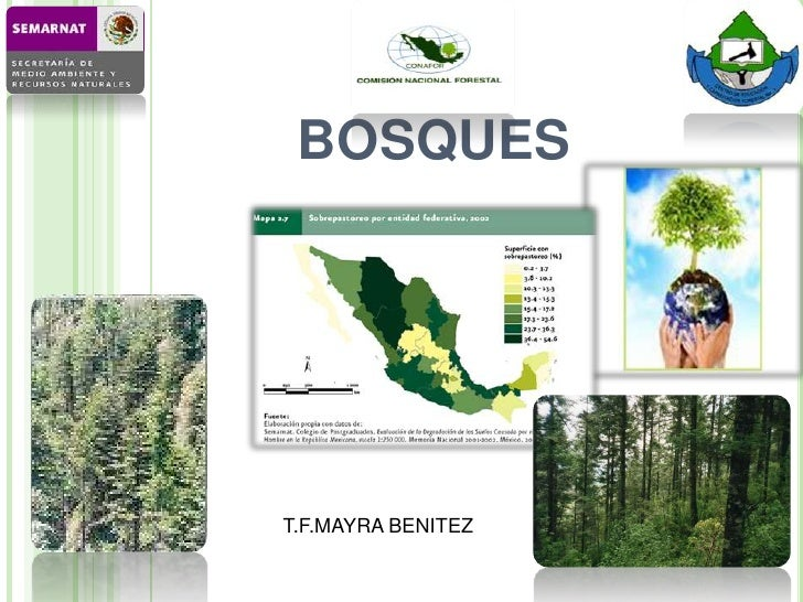 BOSQUES<br />T.F.MAYRA BENITEZ<br />