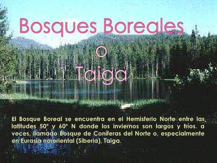 El Bosque        betes (Picea)Boreal es        y pinosrelativamente    (Pinus). Loshomogéneo        líquenes yy su forma d...