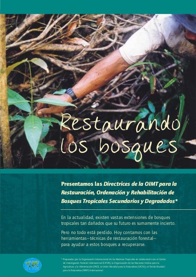 Restaurandolos bosquesPresentamos las Directrices de la OIMT para laRestauración, Ordenación y Rehabilitación deBosques Tr...