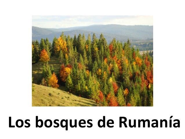 Los bosques de Rumanía