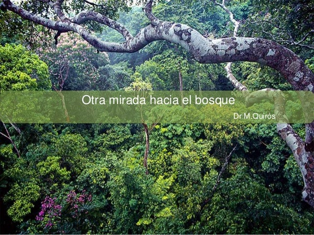 Otra mirada hacia el bosque Dr M.Quirós