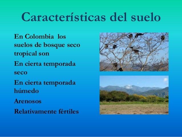 Bosques secos tropicales for Cuales son las caracteristicas del suelo