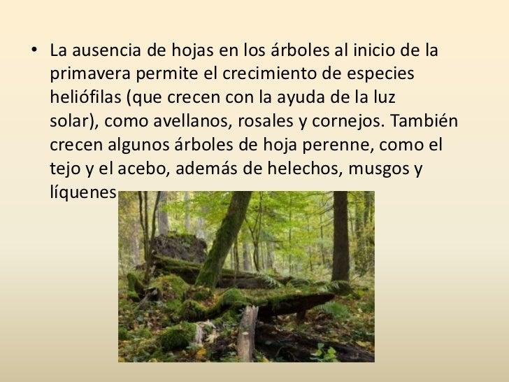 Bosques caducifolios for Arboles de hoja perenne para clima continental