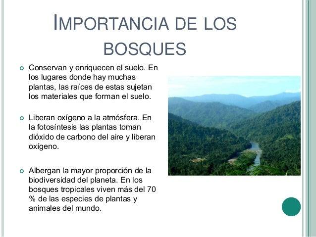 Bosques de venezuela for Importancia de los viveros forestales