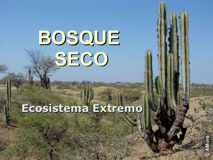 BOSQUE  SECO Ecosistema Extremo
