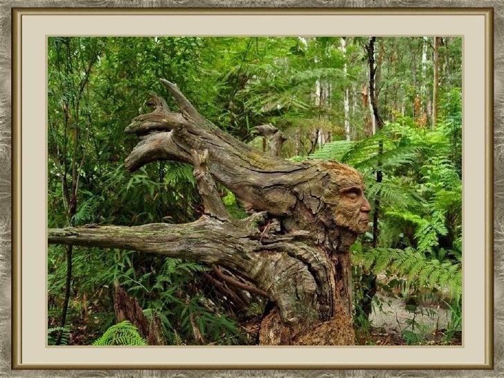 Bosque Tallado Slide 3