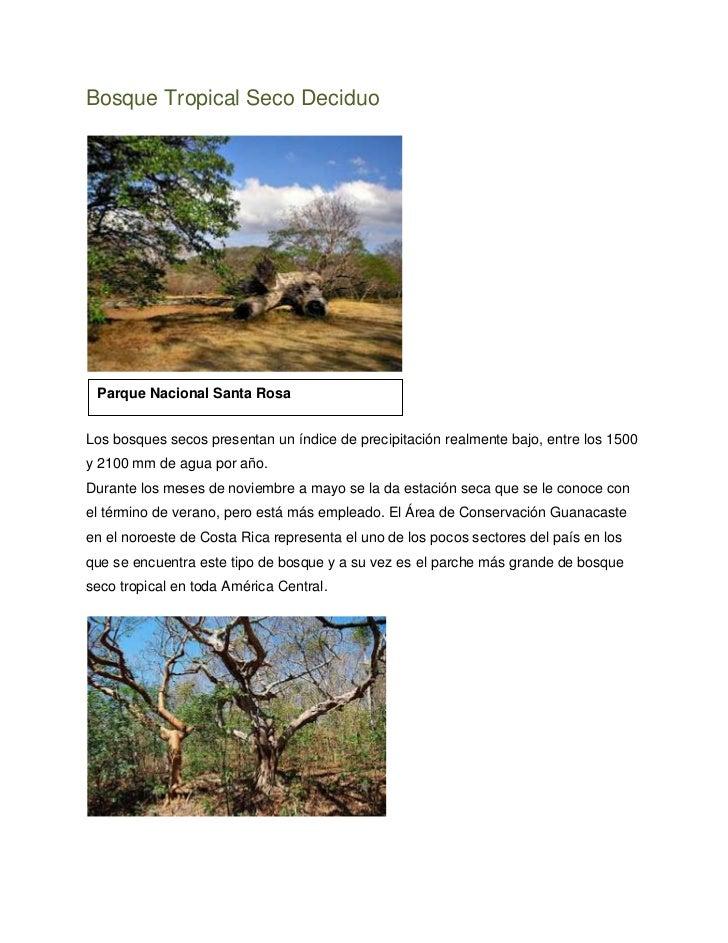 Bosque Tropical Seco Deciduo Parque Nacional Santa RosaLos bosques secos presentan un índice de precipitación realmente ba...