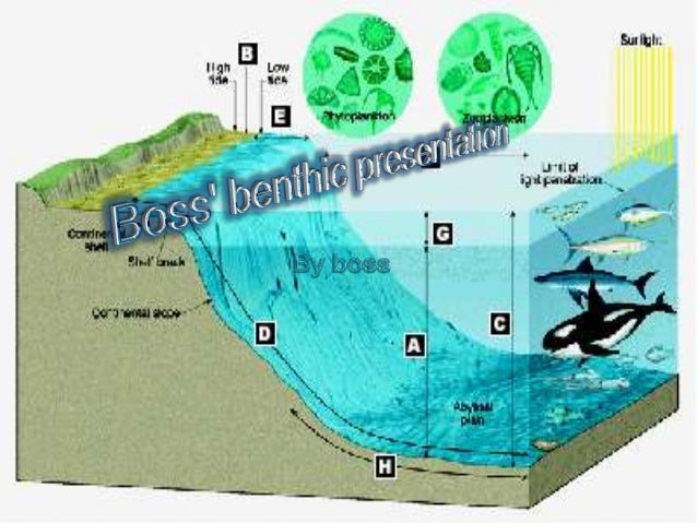 The benthic zone is the ecological region at the lowest level of a body ofwater such as an ocean or a lake, including the ...