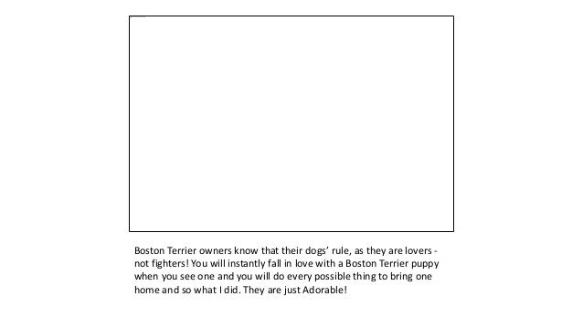 10+ Cutest Gifts for Boston Terrier Lovers Slide 2