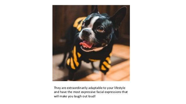 10+ Cutest Gifts for Boston Terrier Lovers Slide 3