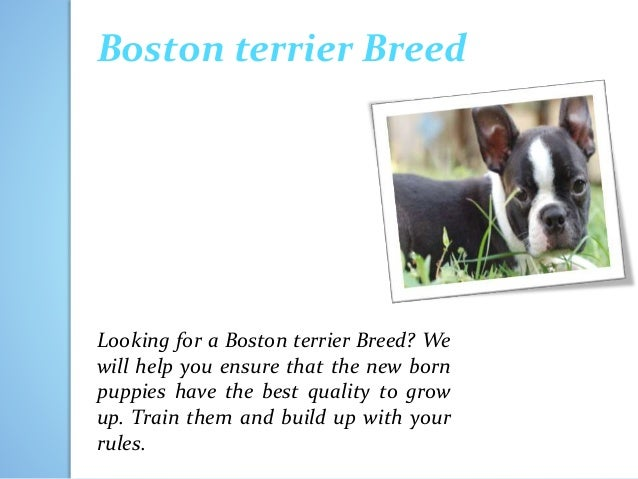Build to breed 2