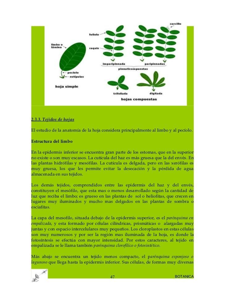 botanica-47-728.jpg?cb=1252407667