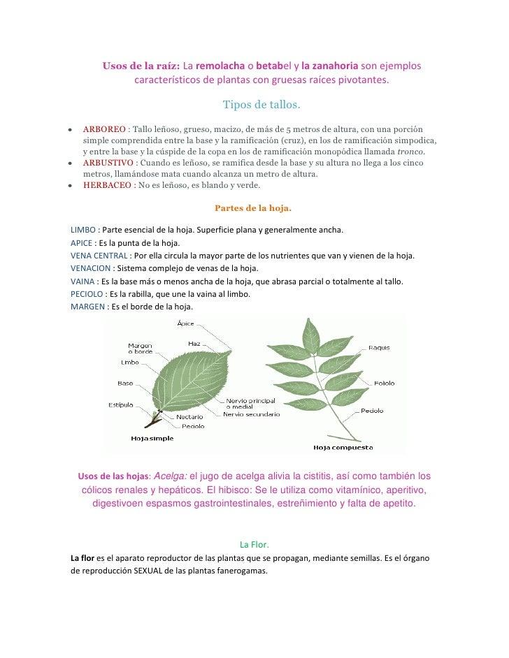 Botanica Slide 2