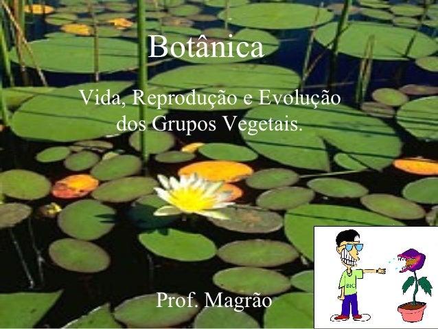 BotânicaVida, Reprodução e Evolução   dos Grupos Vegetais.       Prof. Magrão