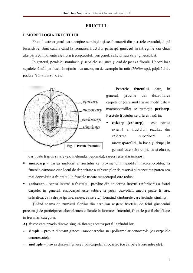 Disciplina Noţiuni de Botanică farmaceutică – l.p. 8                                            FRUCTULI. MORFOLOGIA FRUCT...
