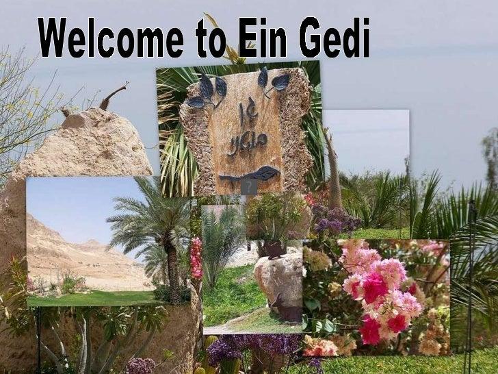 Welcome to Ein Gedi